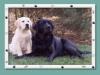 pup10-300x194